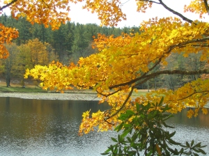 Bass Lake fall
