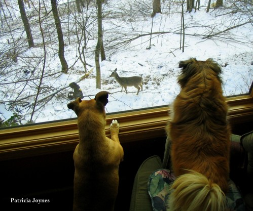 Doggies in the Window 5-1-2015 2-05-00 PM 2353x1964.jpg